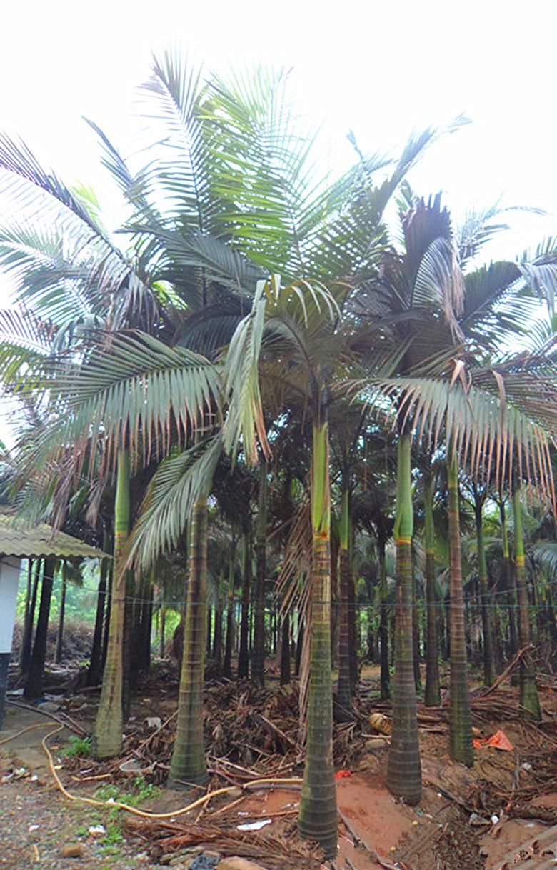 假槟榔伊人无码亚洲在线3-4m